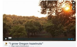 Oregon Hazelnut Video